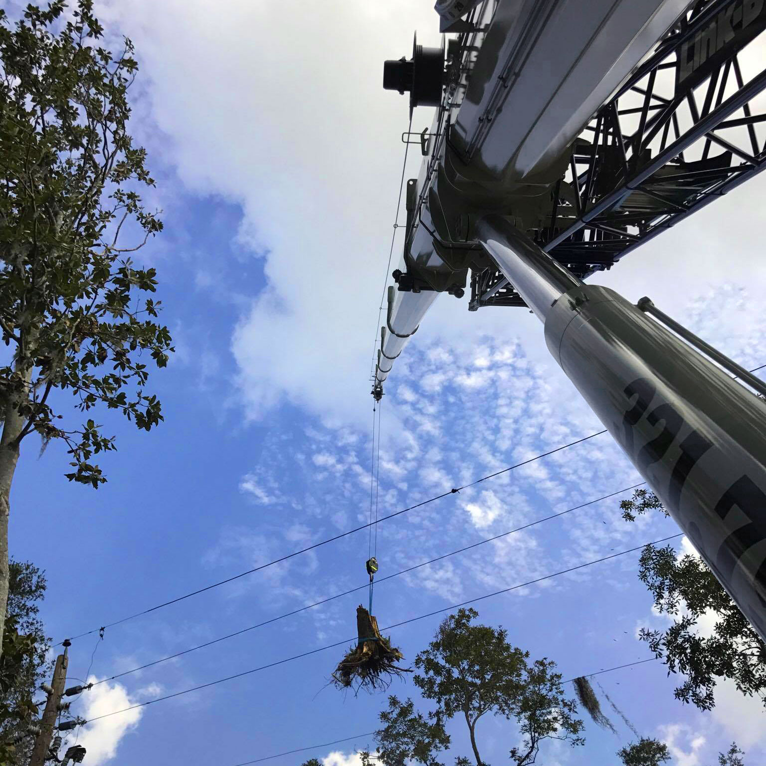 Spinning Crane Works tree removal service